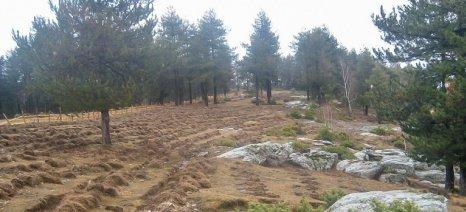 Απόδοση δασικών εκτάσεων για καλλιέργειες … στο παρά πέντε των εκλογών