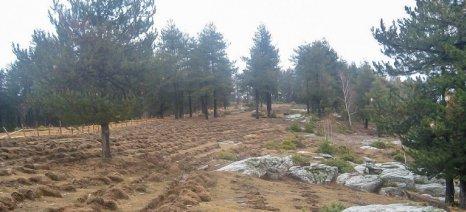 Δίμηνη παράταση για την υποβολή αντιρρήσεων κατά αναρτημένων δασικών χαρτών