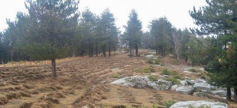 Νέες ρυθμίσεις για δάση και δασικούς χάρτες από το ΥΠΕΝ έως το τέλος Φεβρουαρίου