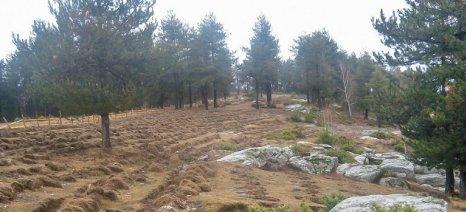 Ετοιμάζονται αλλαγές στους δασικούς χάρτες με νέο περιβαλλοντικό νομοσχέδιο