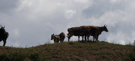 """Άνοιξε για αιτήσεις το πρόγραμμα """"Γενετικοί πόροι στην Κτηνοτροφία"""" - ποιες φυλές επιδοτούνται"""