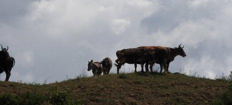 """Παράταση έως 30 Σεπτεμβρίου για τα φετινά αιτήματα πληρωμής της δράσης 10.2.1 """"Γενετικοί Πόροι στην Κτηνοτροφία"""""""