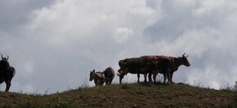 Στην Διαύγεια οι δικαιούχοι της Δράσης για τις αυτόχθονες φυλές