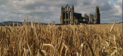 Ξηρασία στον Καναδά και καύσωνας στην Ευρώπη εκτίναξαν τις τιμές στο σιτάρι
