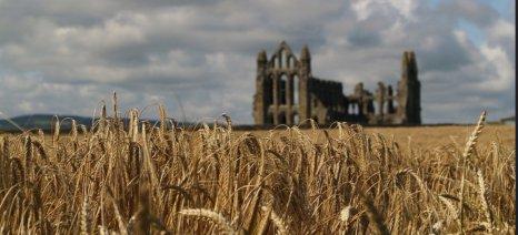 Χαμηλές αποδόσεις στα σιτηρά της Βρετανίας, λόγω της ανοιξιάτικης ξηρασίας