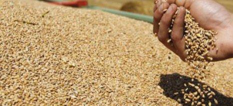 Το σιτάρι ως νόμισμα αποθηκεύουν οι Ρώσοι αγρότες, προκαλώντας αναταραχή στις αγορές