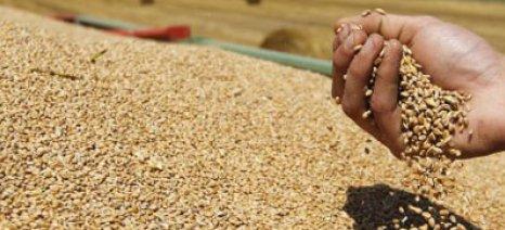 Καθορίστηκε με υπουργική απόφαση στα 10 ευρώ/στρέμμα το πριμ στο σκληρό σιτάρι