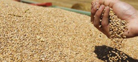 Απολογισμός Copa-Cogeca: Αύξηση κατά 5,2% στην ευρωπαϊκή παραγωγή σκληρού σίτου