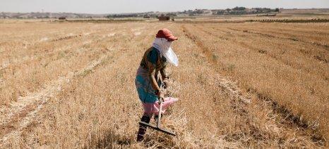 Πώς ο πόλεμος στη Συρία την έχει μετατρέψει σε εισαγωγέα σιτηρών
