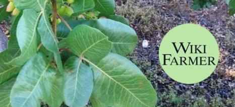 Το wikifarmer.com είναι δημιούργημα δύο Ελλήνων γεωπόνων και σου δείχνει πώς να γίνεις αγρότης