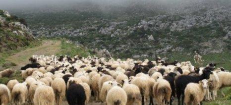 Αποτέλεσμα εικόνας για ψύλλοι κτηνοτροφικες μονάδες