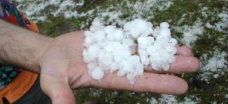 Αναγγελία ζημιάς για το χαλάζι της 7ης Φεβρουαρίου σε ορισμένες περιοχές στη Λακωνία
