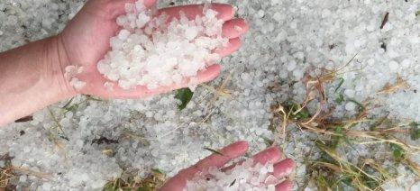 Κατάσταση εκτάκτου ανάγκης λόγω χαλαζοπτώσεων και ανεμοθύελλας ζητούν οι αγρότες του Τυρνάβου