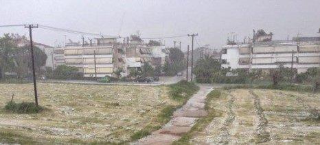 Μέχρι τις 22 Απριλίου δηλώσεις ζημιάς από χαλάζι στο δήμο Αλεξανδρούπολης