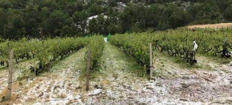 Χαλαζόπτωση στην Κυρακαλή Γρεβενών κατέστρεψε καλλιέργειες
