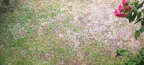 Καταιγίδα και χαλάζι έκαναν ζημιές σε καλλιέργειες στους Δήμους Σοφάδων και Λ. Πλαστήρα