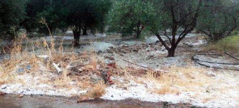 Χαλάζι με βροχή έπληξε τις ελιές στο Ηράκλειο - ερώτηση κατέθεσε ο Δανέλλης