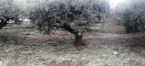 Λάρισα και Ημαθία «θρηνούν» ολοκληρωτικές καταστροφές στις δενδρώδεις καλλιέργειές τους λόγω της σφοδρής χαλαζόπτωσης