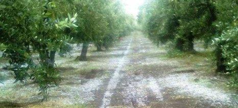 Την άμεση πληρωμή των αποζημιώσεων ΕΛΓΑ στους αγρότες της Μαγνησίας ζητούν Παπανάτσιου-Μεϊκόπουλος