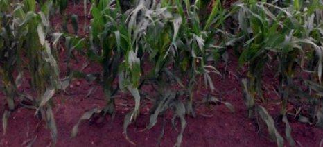 Ισχυροί άνεμοι και χαλάζι έπληξαν καλλιέργειες στα Φάρσαλα - άμεσες αποζημιώσεις ζητά η ΕΟΑΣΝΛ