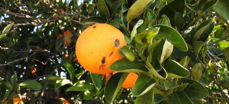 Μανιάτης: «Άμεση εκτίμηση των πρόσφατων ζημιών από ανεμοθύελλα στην Αργολίδα»
