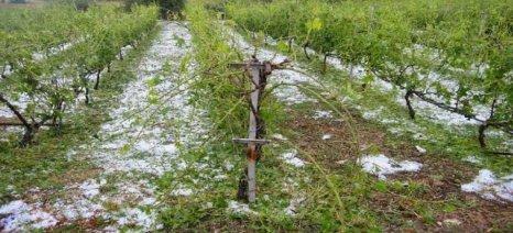 Δέσμευση για αποζημίωση των πληγέντων αγροτών από τις ισχυρές βροχοπτώσεις στην Κρήτη