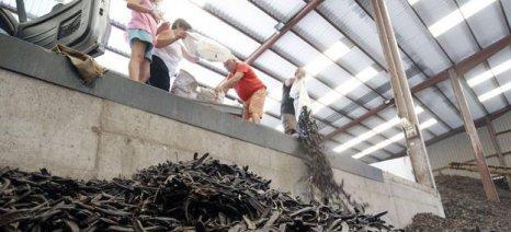 Καταγγελίες Ισπανών αγροτών για μαζικές κλοπές χαρουπιών και διάθεσή τους στην αγορά