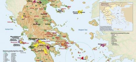Φτωχός, ποιοτικός και ακριβός ο φετινός τρύγος σύμφωνα με τον Σύνδεσμο Ελληνικού Οίνου
