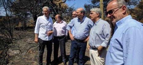 Αποζημιώσεις ρητινοσυλλεκτών και αντιπλημμυρικά έργα στην πυρόπληκτη Εύβοια ανακοίνωσε ο Χατζηδάκης