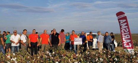 Η Χελλαφάρμ παρουσίασε τα αποτελέσματα από την καλλιέργεια της ποικιλίας βαμβακιού Carisma στη Ροδόπη