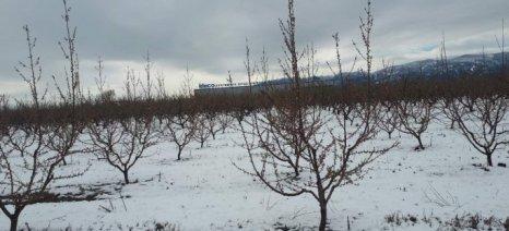 Τις επόμενες μέρες λένε οι γεωπόνοι ότι θα εκτιμήσουν την επιρροή που είχε η χιονόπτωση στις καλλιέργειες της Ημαθίας