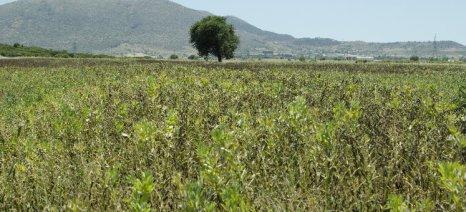 Καμία μεταβίβαση αγροτεμαχίων από αγρότες με οφειλές σε ταμεία