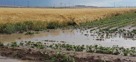 Χαλάζι και βροχή είχαν ως αποτέλεσμα να πλημμυρίσουν χιλιάδες στρέμματα σε Κιλελέρ και Φάρσαλα
