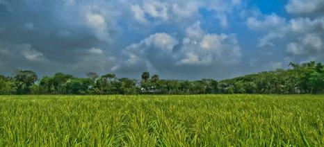 Παραχώρηση 20 αγροτεμαχίων σε αγρότες στον Δήμο Δοξάτου