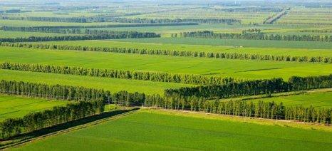 Εγκρίθηκαν πιστώσεις 7,5 εκατ. ευρώ για τις δασώσεις γεωργικών γαιών προηγούμενων ετών