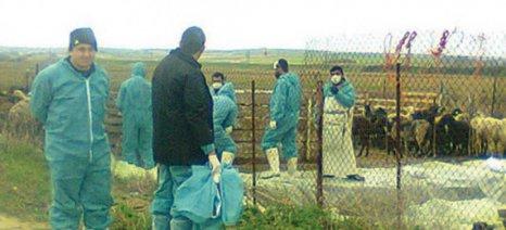 Εντάσεις, ενστάσεις και προβληματισμός για τον εμβολιασμό των ζώων στην Ανατολική Μακεδονία και Θράκη