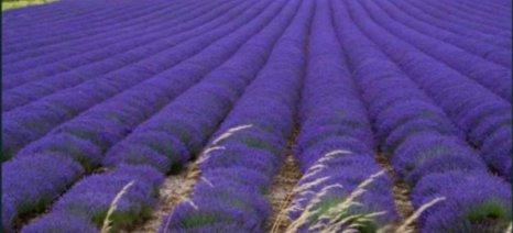 Συνεργασία με ελληνική εταιρεία για αρωματικά φυτά σε παλιά ορυχεία έχει στα σκαριά η ΔΕΗ