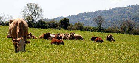 Απογοήτευση για το πρόγραμμα βιολογικής κτηνοτροφίας από 28 φορείς