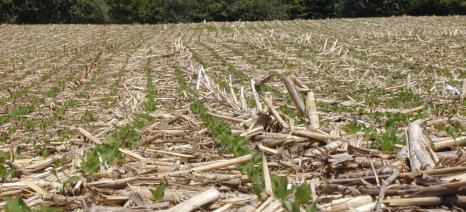 Αμύνταιο: Ενημέρωση για χρήση βιομάζας από καλαμποκιού στην τηλεθέρμανση