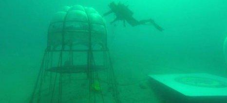 Λαχανόκηπος σε θάλασσα της Ιταλίας μπορεί να αλλάξει τα δεδομένα στην καλλιέργεια κηπευτικών