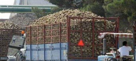 Κοζάνη: Πληρωμές απορριπτέων παραγωγών ζαχαροτεύτλων