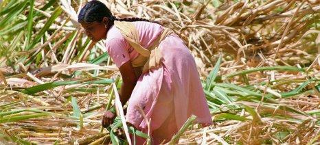Μεγάλη «ξηρασία» στην Ινδία ανεβάζει τις τιμές στη ζάχαρη