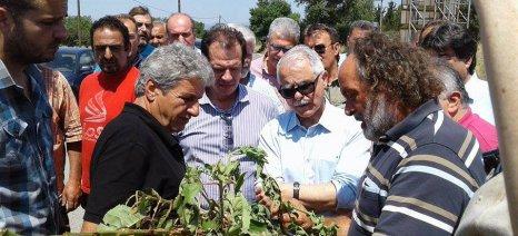 Αντιπαράθεση δηλώσεων μεταξύ Κουρεμπέ και Κωνσταντινόπουλου για τις εκτιμήσεις ζημιών στην Πελοπόννησο