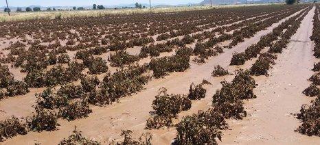 Εγκρίθηκε κονδύλι 18 εκατ. ευρώ για ΠΣΕΑ σε φυτική και ζωική παραγωγή