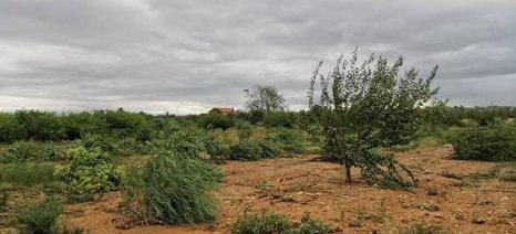 Αγροτικός τομέας και ασφαλιστικές: Μεγάλα τα περιθώρια ανάπτυξης