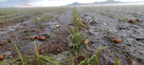 Τον γύρο των social media κάνουν εικόνες καταστροφής από τις καλλιέργειες και τους σταύλους