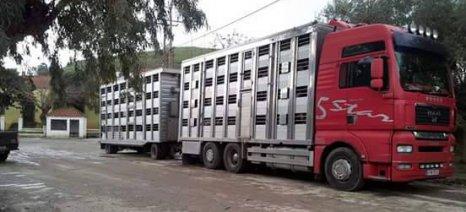 Παύει σε όλη τη χώρα η μετακίνηση των ζώντων βοοειδών για αγοραπωλησία μέχρι τέλος του έτους