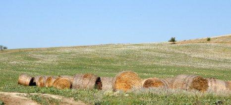 Πρόσθετα μέτρα από την Κομισιόν για να αντιμετωπίσουν την ξηρασία οι Ευρωπαίοι κτηνοτρόφοι